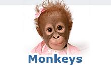 Shop Monkeys